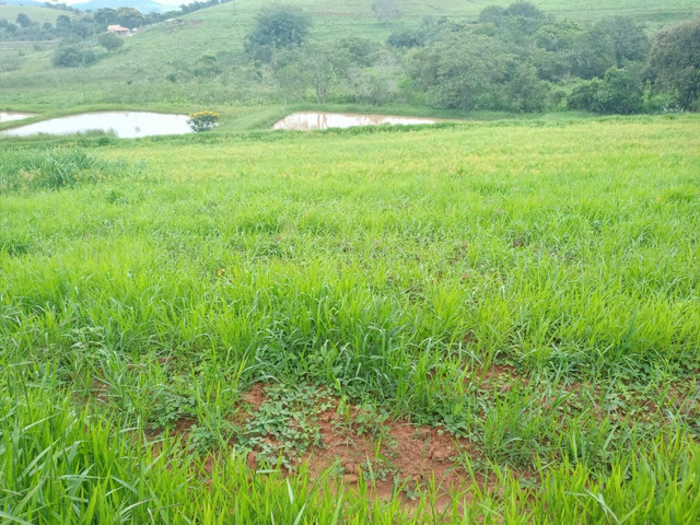 Sítio 20 Alqueires próximo a Pouso Alegre no sul de Minas Gerais  - Foto 2