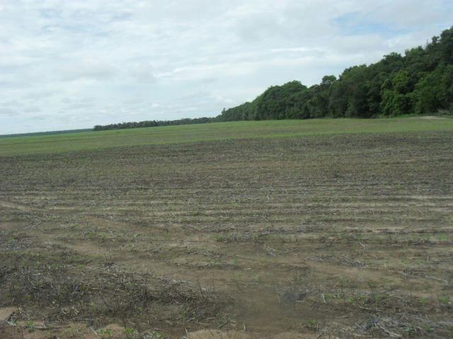 Oportunidade Fazenda Barata 2.070 Alqueires Mato Grosso