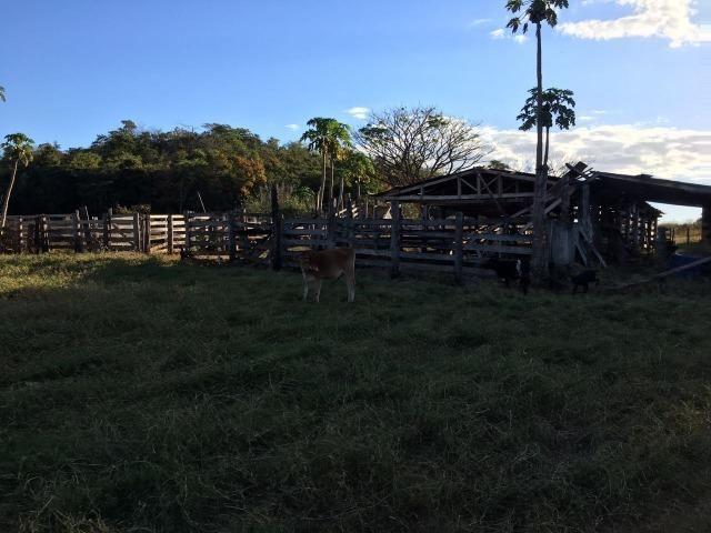 217 hectares, com 150 hectares aberto 32 km de Dom Aquino -MT - Foto 3