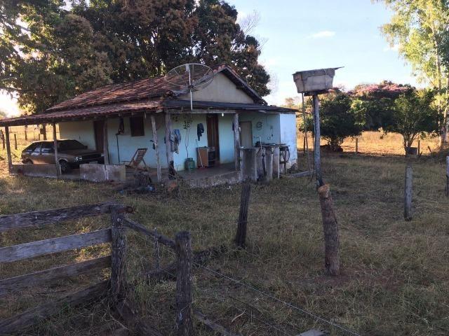217 hectares, com 150 hectares aberto 32 km de Dom Aquino -MT - Foto 18
