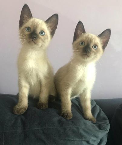 Doa-se lindos gatinhos com vale castração - Foto 4