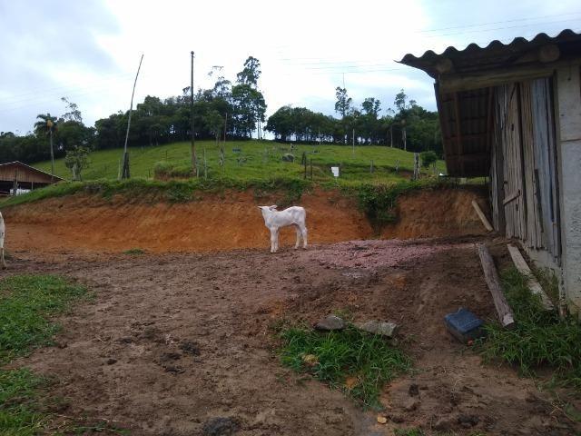 Tourinho Brahman PO - Foto 3