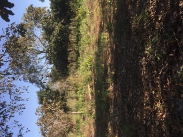 Chácara na estrada de Santo de Leverger.a 2 km da estrada - Foto 6