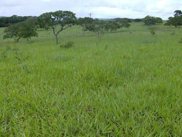 Fazenda escriturada perto de Brasília Santo Antônio Goiás formada 51 alqueires - Foto 2