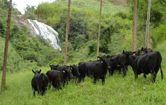 {FR} Crédito Rural para  Arrendar. - Foto 3