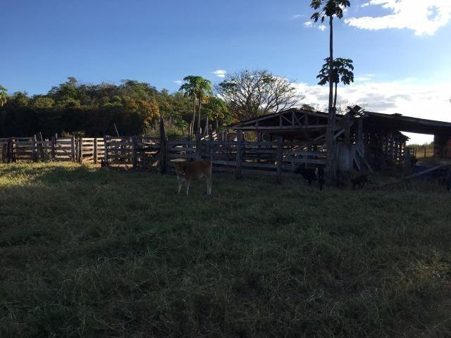 217 hectares, com 150 hectares aberto 32 km de Dom Aquino -MT - Foto 6