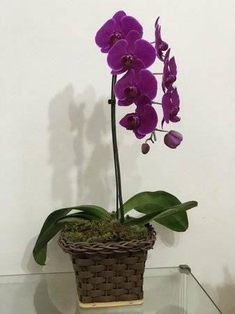 Curso de orquídeas para vendas