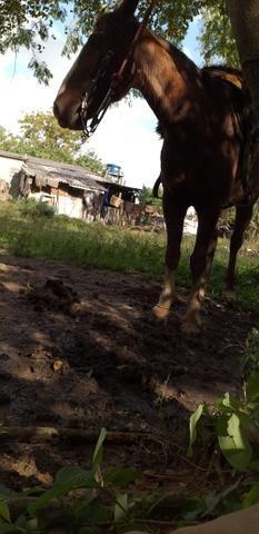 Cvalo tostado