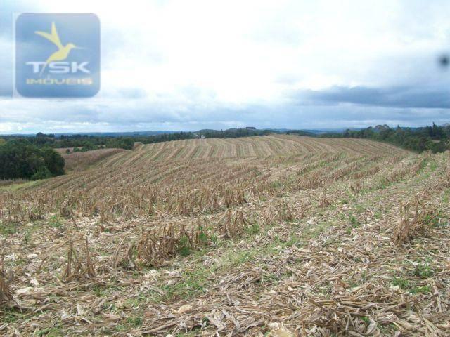 Fazenda em Quitandinha - (Cerrinho) - - Foto 5