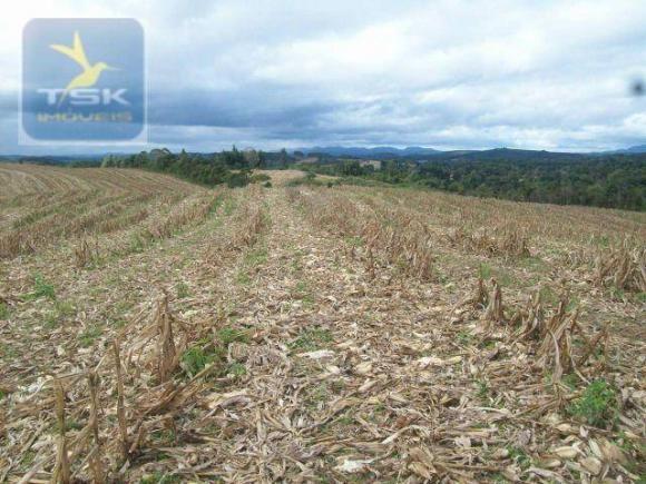 Fazenda em Quitandinha - (Cerrinho) - - Foto 18