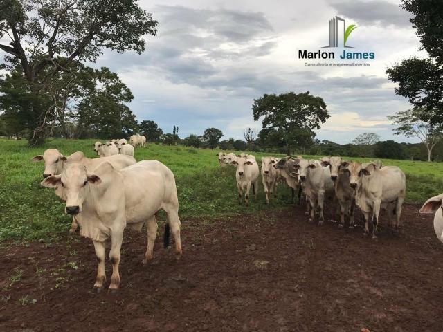 Fazenda em Uruaçu-Go - Foto 12