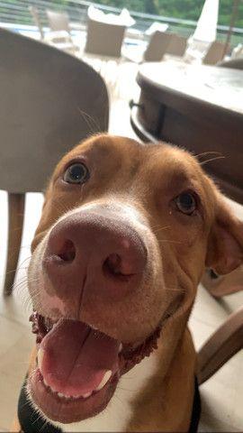 Procura-se cadela no cio pra namorar meu cachorro - Foto 5