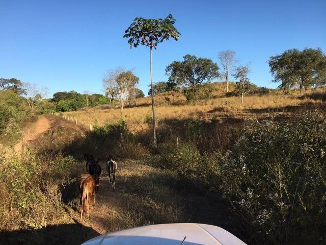 217 hectares, com 150 hectares aberto 32 km de Dom Aquino -MT - Foto 8