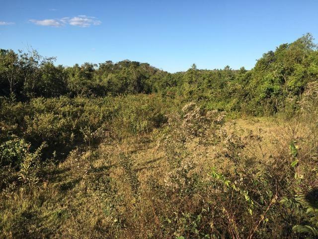 217 hectares, com 150 hectares aberto 32 km de Dom Aquino -MT - Foto 10