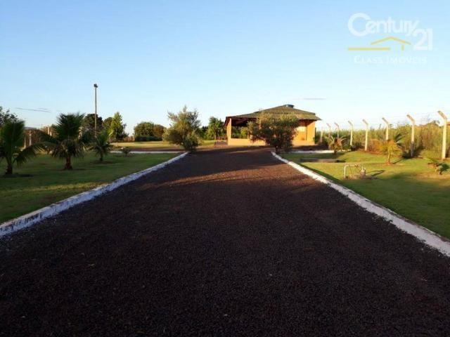 Chácara rural à venda, limoeiro, londrina. - Foto 3