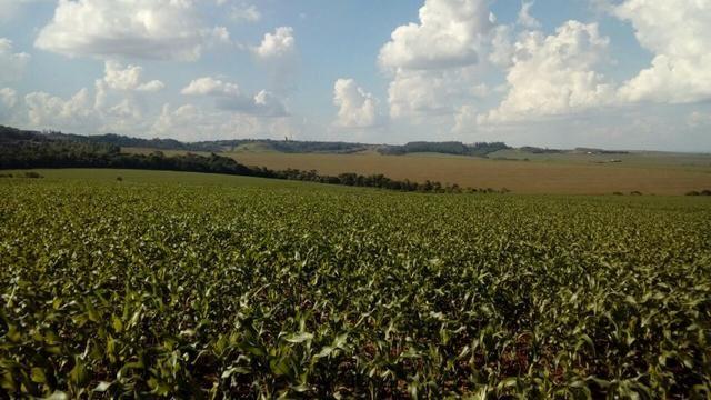 Fazenda 405 alqueires em Goioerê - PR - Foto 4