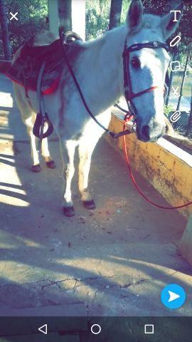 Cavalo bom e manço pra criança