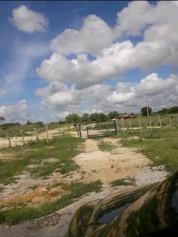 Fazenda em forquilha 130 hectares - Foto 10