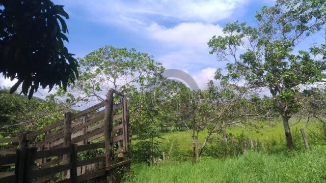Sítio 20 ha região baú da guia mt - Foto 9