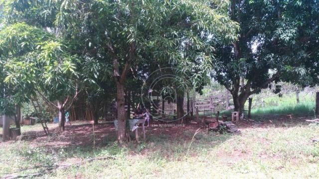 Sítio 20 ha região baú da guia mt - Foto 14