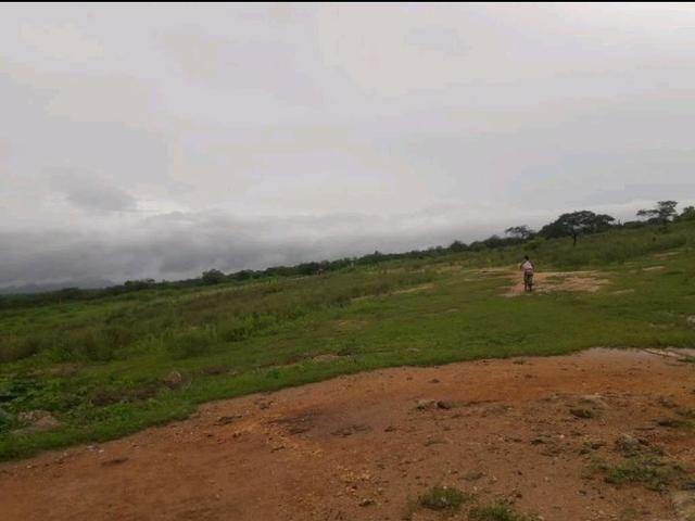Fazenda em forquilha 130 hectares - Foto 2