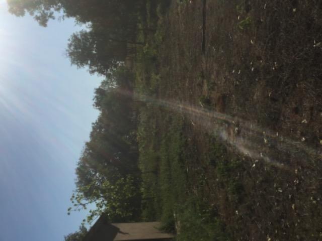 Chácara na estrada de Santo de Leverger.a 2 km da estrada - Foto 5