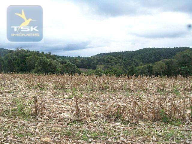 Fazenda em Quitandinha - (Cerrinho) - - Foto 8