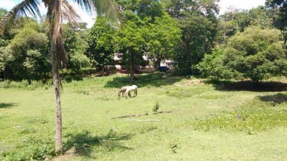 Ótimo sítio em Vale das Pedrinhas - Guapimirim RJ - Foto 7