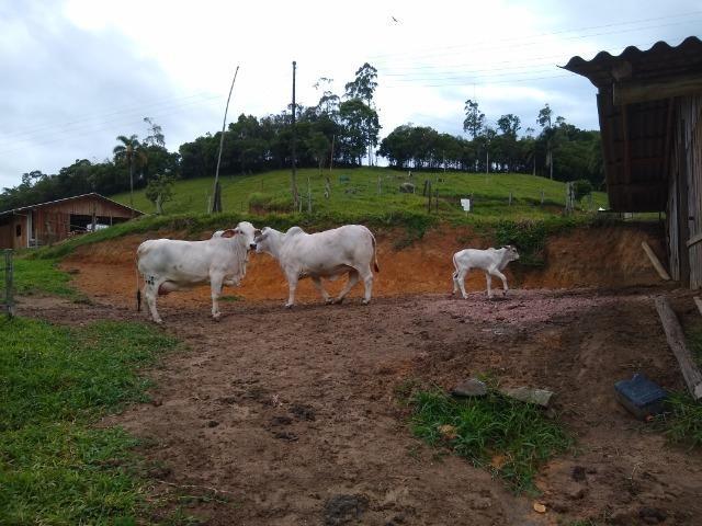 Tourinho Brahman PO - Foto 4