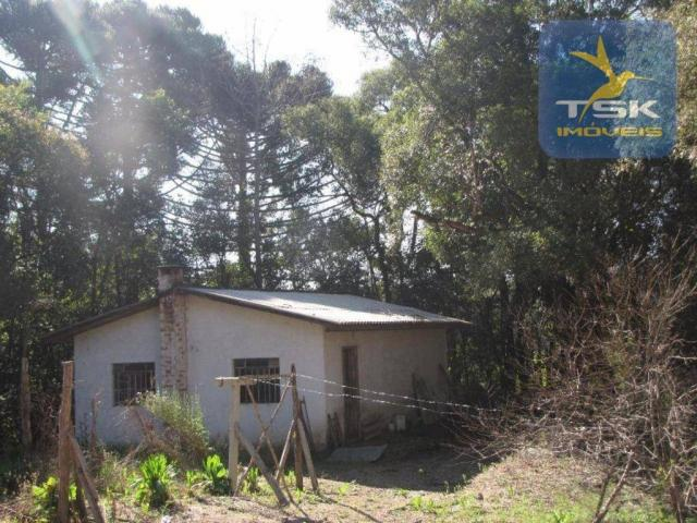 CH0252 - Agudos do Sul Chácara 10.000 m² frente asfalto 2 km da cidade - Foto 17