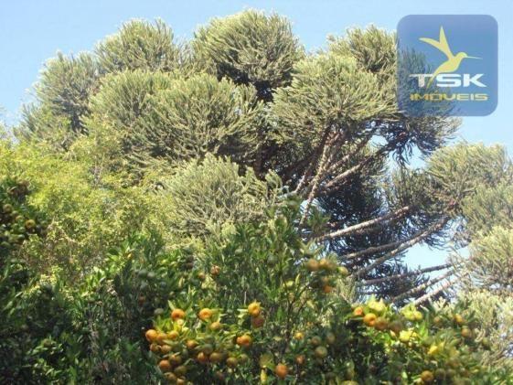 CH0252 - Agudos do Sul Chácara 10.000 m² frente asfalto 2 km da cidade - Foto 7