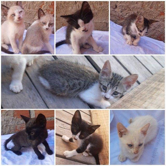 Gatos para adoção responsável. - Foto 2