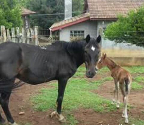 Égua com filhote