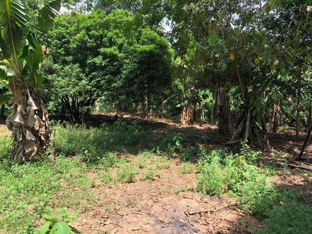 Chácara em Inhapim, 6000 m². Toda murada. Valor 250 mil - Foto 16