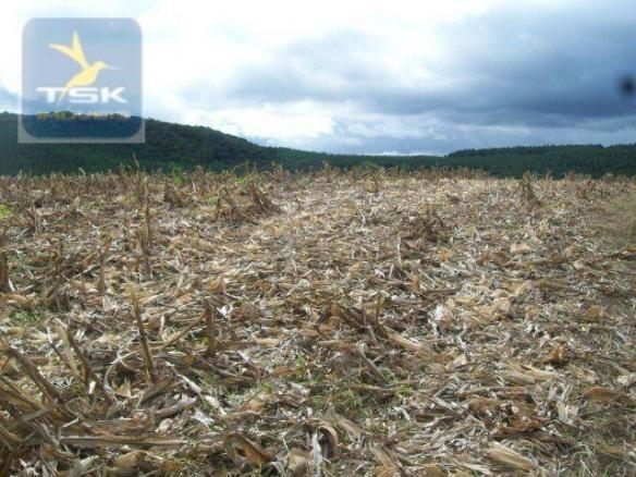 Fazenda em Quitandinha - (Cerrinho) - - Foto 20