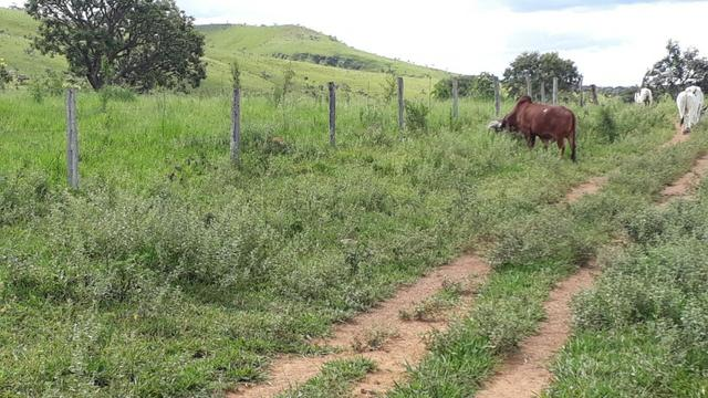 Fazenda Linda - Foto 9