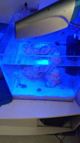 Aquário marinho 28 litros - Foto 2