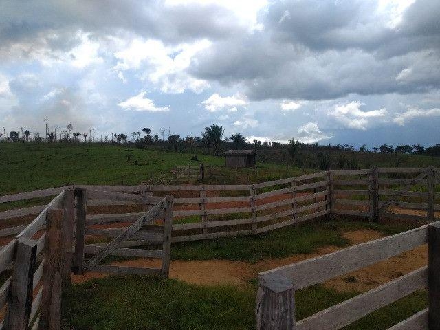 Fazenda (Porteira fechada) no Apuí-AM - Foto 2