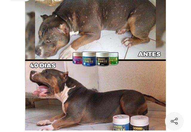 Vitaminas para cães  - Foto 4