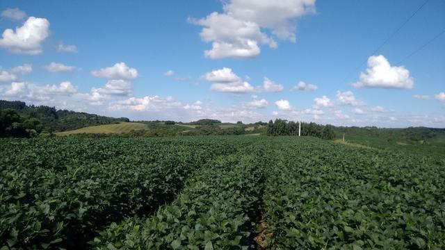 Fazenda vendo Santa Maria do Oeste - PR - Foto 3