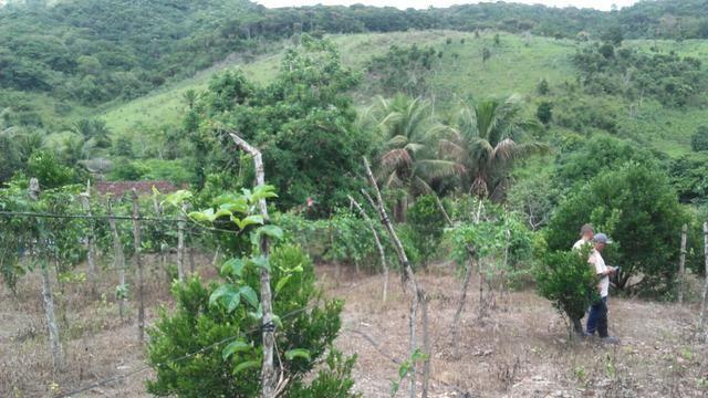 Sítio dos sonhos seu pedaço do Paraíso com 7 hectares por 150 mil - Foto 14