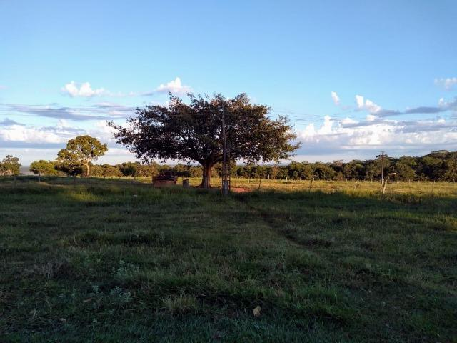 2.253 Há. Alto Garças-MT (Plana ao Lado Lavoura) - Foto 4