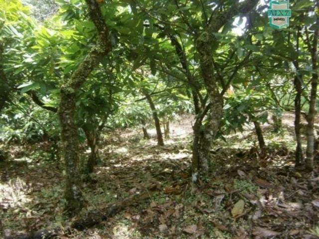 Fazenda de 278 hectares, entre Ubaitaba e Travessão - Foto 17