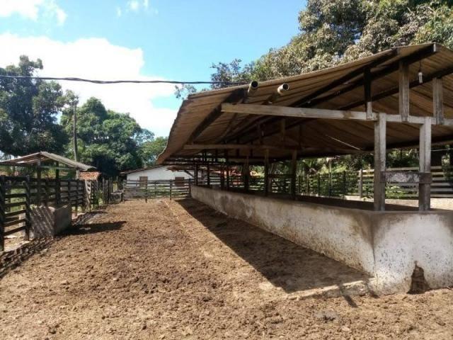 Fazenda para venda em paudalho, guadalajara - Foto 4