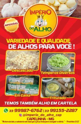 Alho  - Foto 5