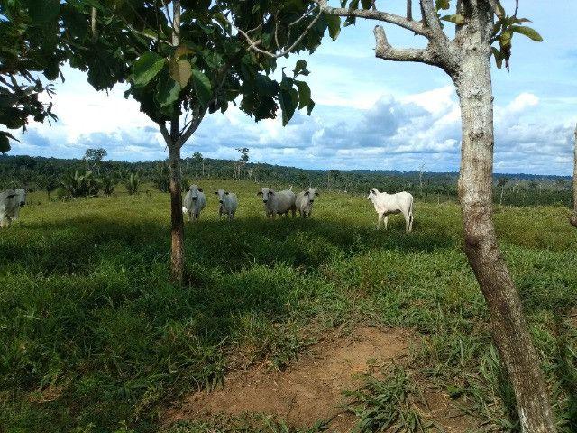 Fazenda (Porteira fechada) no Apuí-AM - Foto 3