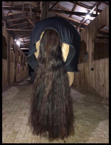 Cavalo Crioulo - Cavalo baio cabus negro  - Foto 5