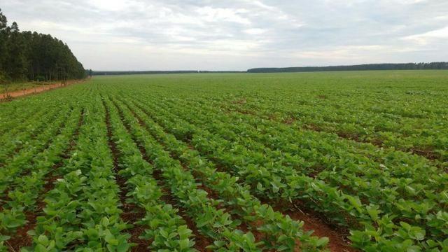 Excelente fazenda de lavoura com 130 alqueires em Amambaí Ms