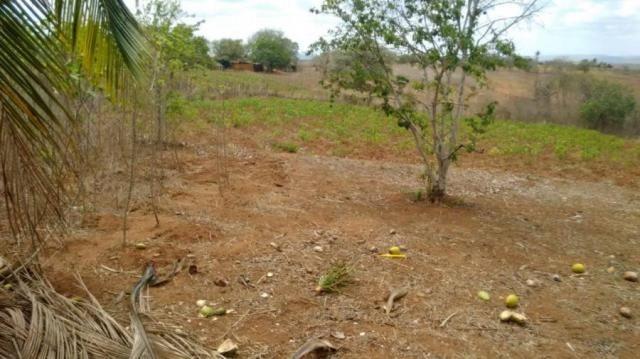 Sítio para venda em lagoa do itaenga, lagoa de itaenga - Foto 5