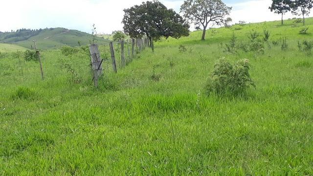 Fazenda Linda - Foto 11